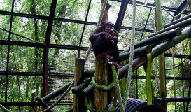 Tampa Galvanizing Center for Great Apes