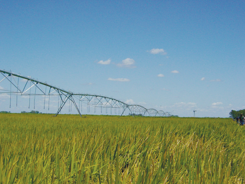 Valley pivot on rice in Brazil