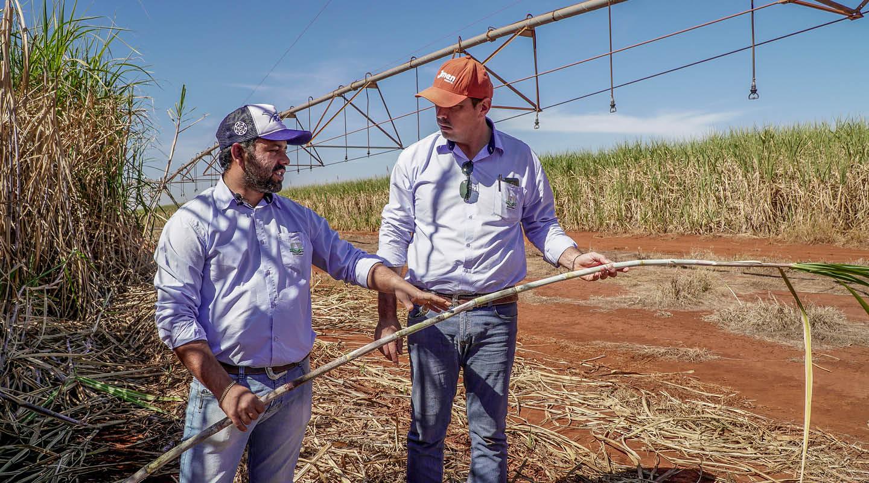 sugarcane-blog-3