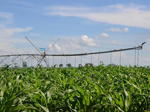 500x375-Corn-OCT