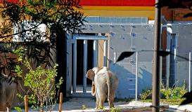 Calwest Galvanizing Los Angeles Zoo's Pachyderm