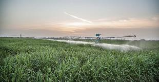 RaingerLinear_sugarcane_Florida_July2012_007_Hi-no-8000_WEB