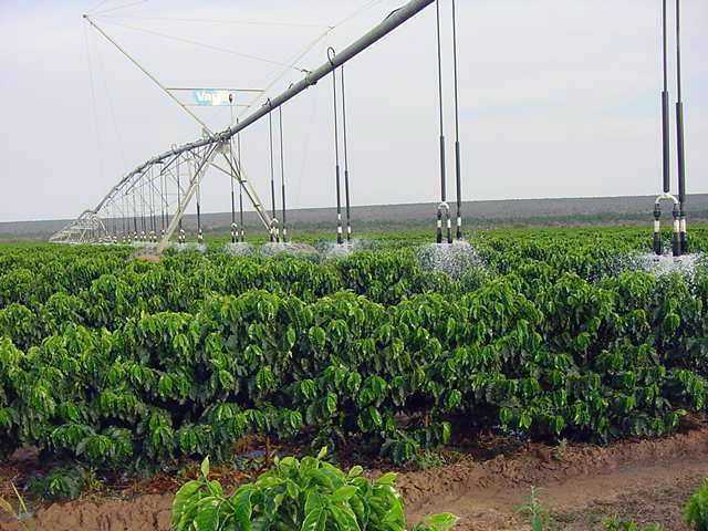 Valley pivot on coffee in Brazil